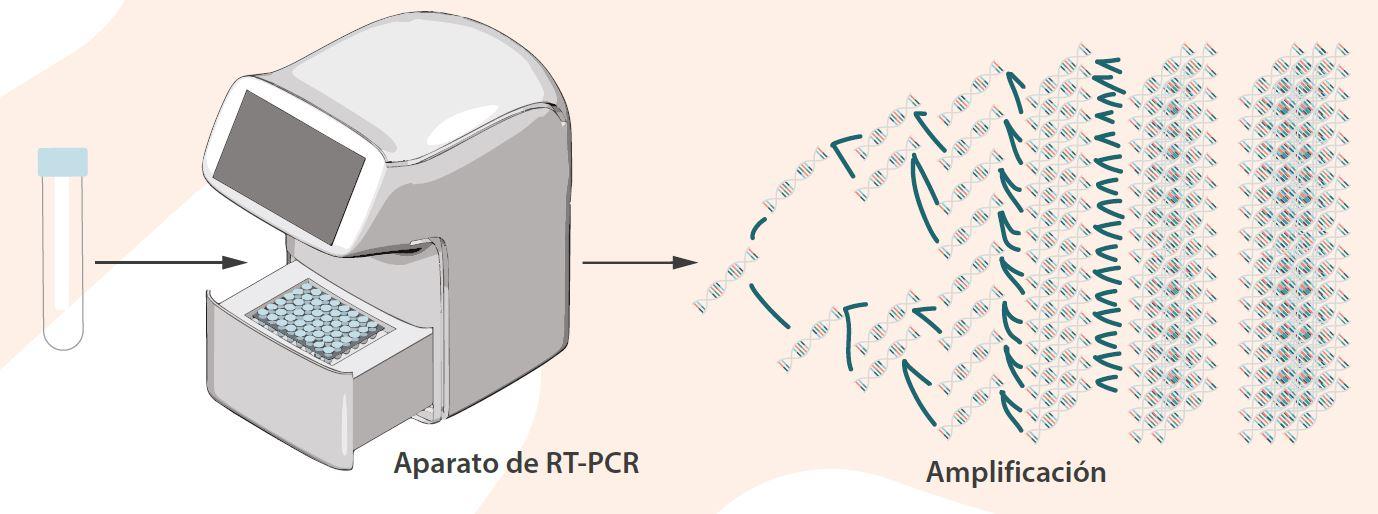 Aparato RT-PCR