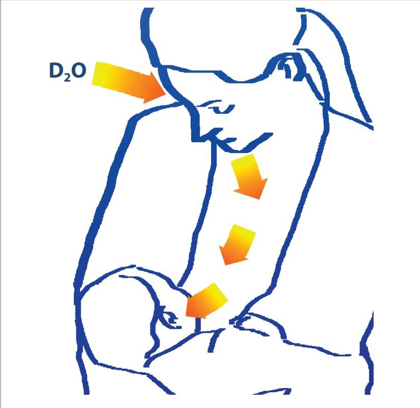 Technique de la dose d'eau deutérée administrée à la mère