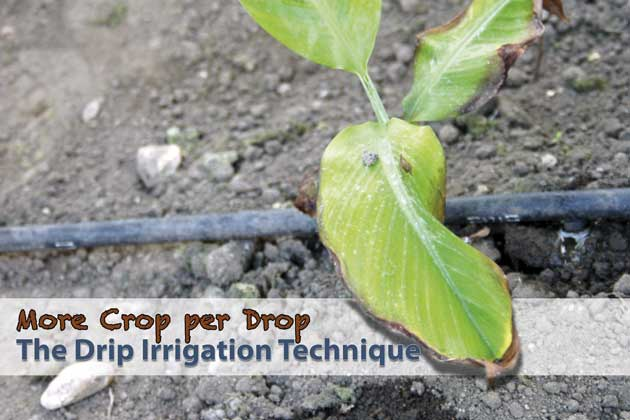 Explaining the drip irrigation technique.