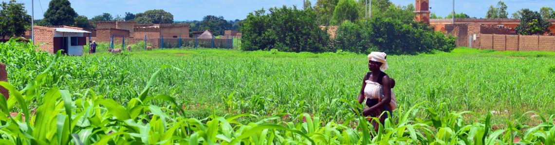 Climate smart agriculture. Burkina Faso