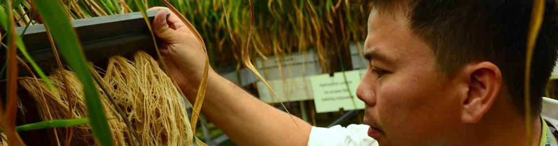 Mutation Detection, Plant Breeding, IAEA Seibersdorf