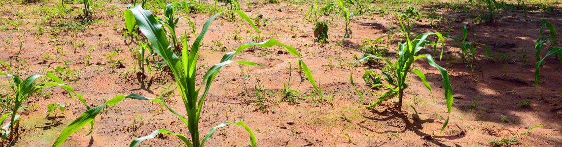 Improving Soil Fertility