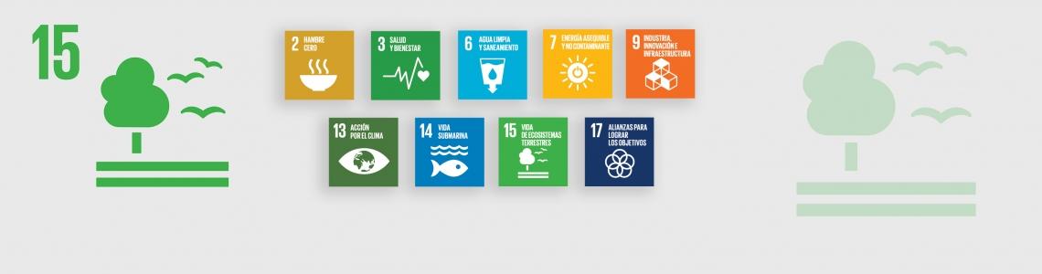 SDG-15-Spanish
