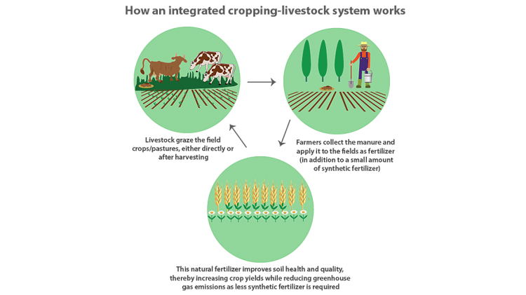 Reducing Greenhouse Gas Emissions in Agriculture With the Help of