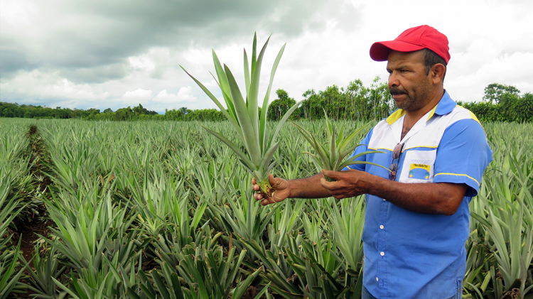 Costa Rica Paves the Way for Climate-Smart Agriculture | IAEA