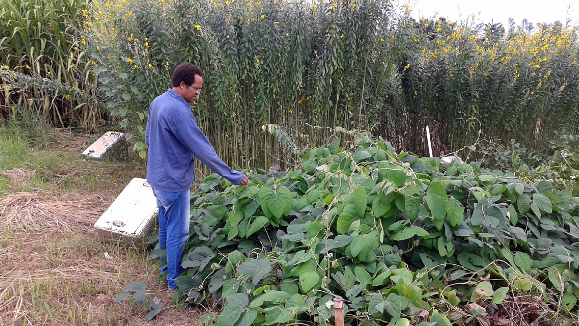 Farmers in Brazil Use Legumes to Reduce Costs, Greenhouse