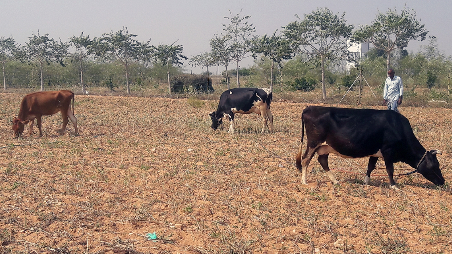 Organic Farming In India Pdf