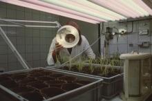 Plant breeding at IAEA laboratory in Seibersdorf. 1969. Please credit IAEA