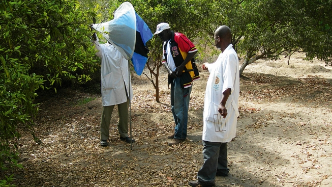 Deployment of a tsetse trap