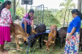 https://www.iaea.org/sites/default/files/styles/thumbnail_165x110/public/dairy-farmers-sri-lanka-1140x640.jpg?itok=NOTTFEkr