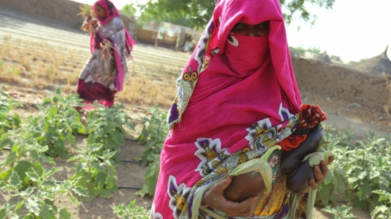 Thriving fields, lasting change: how nuclear science helps women farmers in Sudan leave hunger and poverty behind