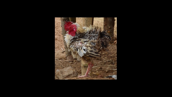Detecting Avian Flu
