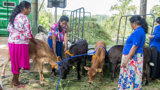 SRL5046 - Improving Livelihoods Through Dairy Cattle Production: Women Farmers' Empowerment