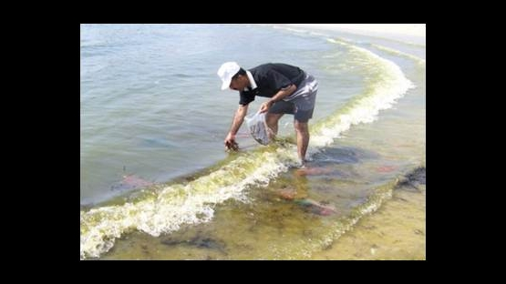 Collection of Marine Algae in Aden, Yemen