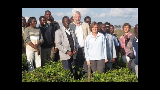 tea farm, tanzania