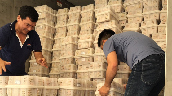 Two male workers in Viet Nam preparing boxes filled with fruit ahead of irradiation, a procedure that kills pests while leaving the fruit intact.