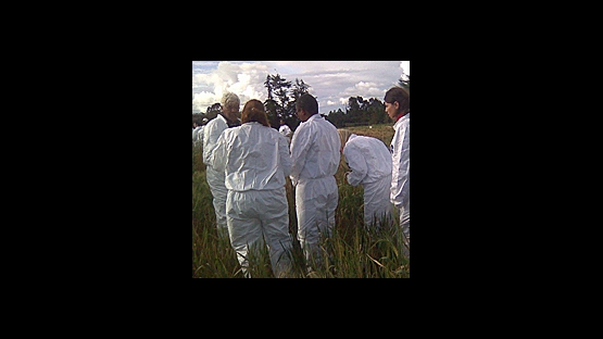 Combatting Wheat Rust