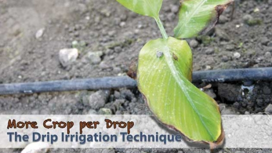 Explaining the drip irrigation technique.