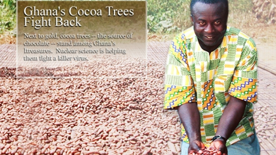 Next to gold, cocoa trees - the source of chocolate - stand among Ghana's treasures.  Nuclear science is helping them fight a killer virus.