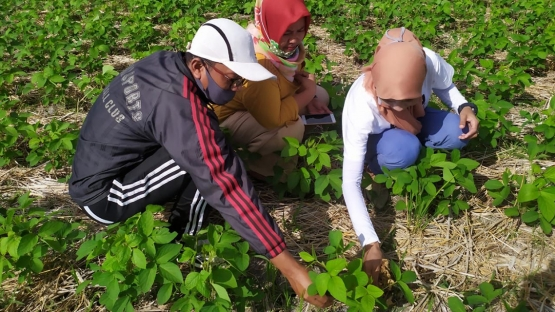 Nur Anidah who coordinates agricultural development in the region speaks with growers of the Mutiara 1 soybean variety in Polman area, West Sulawesi, Indonesia. (Photo: BATAN)