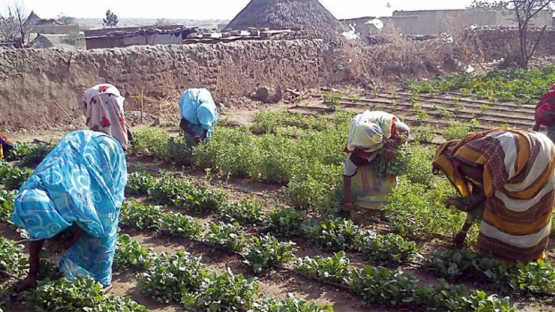 Improving Sudan's Vegetable Production with Small-scale Irrigation Technologies