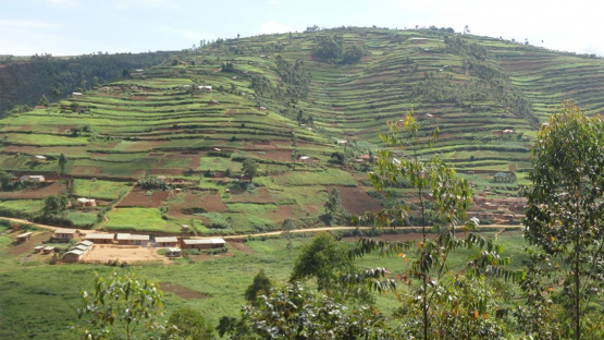 The mountainous agricultural region in Uganda's southwestern highlands are affected by soil erosion