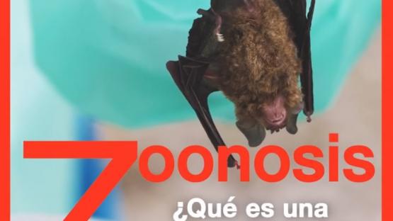Video sobre las zoonosis