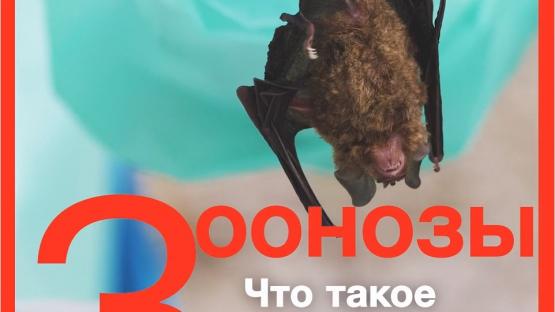 Зоонозы