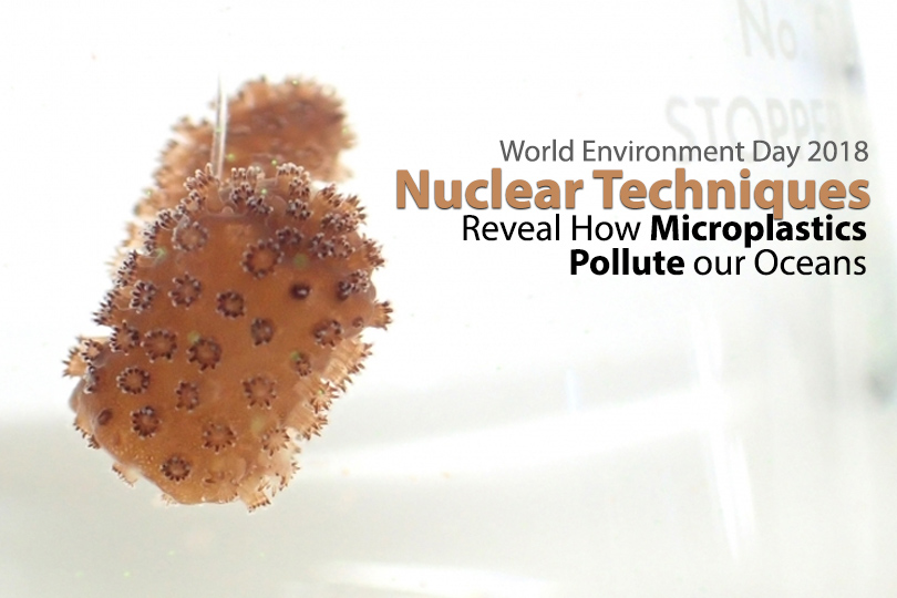While the visible impact of large plastic debris on marine environments has been well documented, the potential harm caused by microplastics is much less clear. Nuclear and isotopic techniques can provide valuable information on their impact and the risk to marine organisms and, ultimately, humans. This information can be used by governments as input into making policy decisions. 